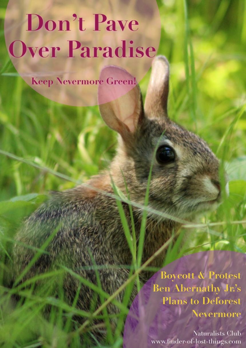 Bunny - dpop protest postcard jpg